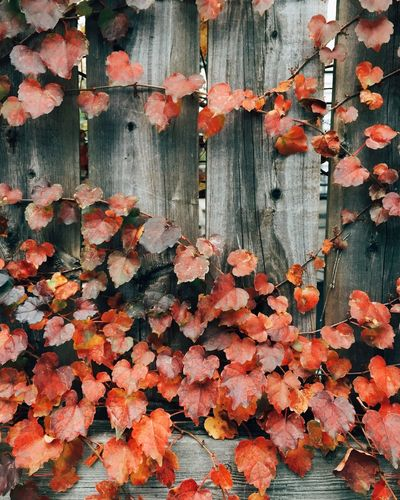 Fall Urban Nature VSCO Autumn Colors Orange By Motorola