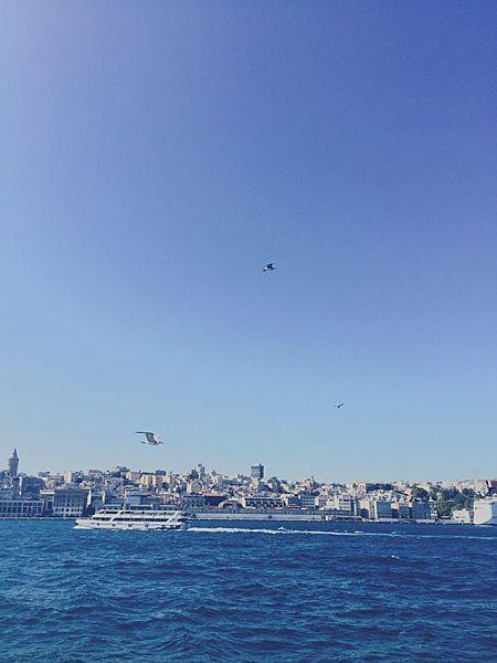 Birds Martı Vapur Sailing Sailboat Istanbul Scenery Scenery Shots