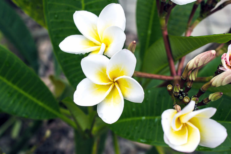 Close-Up Of White Flower Growing On Plant