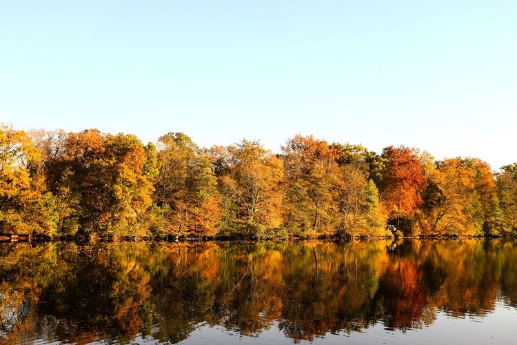 Autumn Autumn Autumn colors Autumn🍁🍁🍁 Tree No People Lake Reflection Nature Beauty In Nature