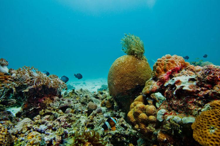 Fish swimming near multi colored corals underwater