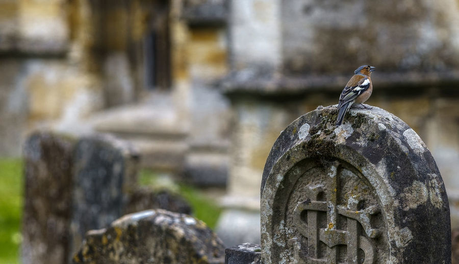 Resting Place Focus On Foreground Architecture No People Day Tombstone Built Structure Old Stone Solid History Cemetery Weathered The Past Religion Grave Spirituality Stone Material Outdoors Bird