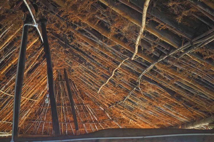 Jungle canopy bamboo tree attic