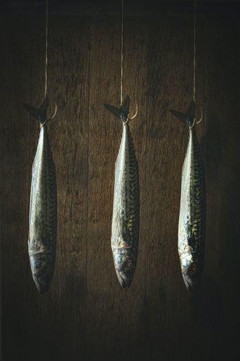 Dead fish hanging on wood