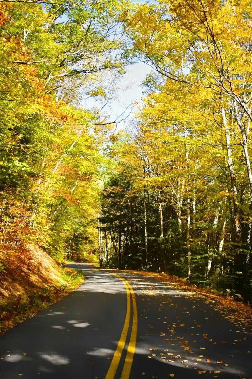 road, autumn, tree, the way forward, change, transportation, nature, leaf, tranquility, scenics, street, outdoors, day, tranquil scene, no people, beauty in nature, landscape, sky
