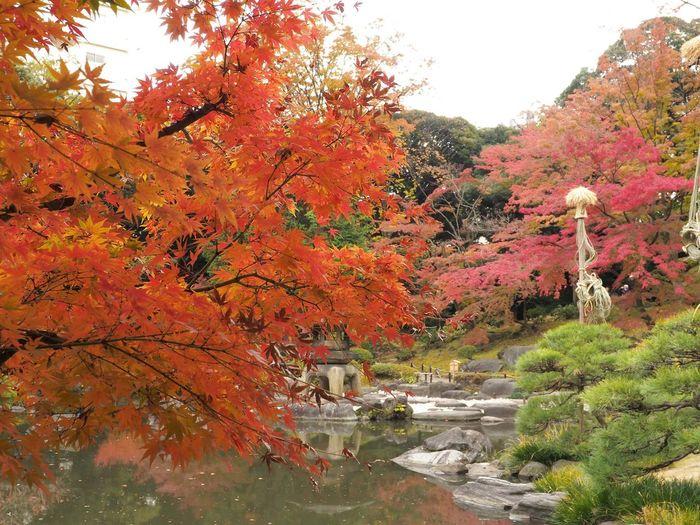 2018/11/29 Thu 🌃☀ お疲れさまです。 せっかく早く帰れるのに電車のダイヤがガタガタ! はぁ〜 ファインダー越しの私の世界 ファインダーは私のキャンパス Olympus オリンパス E_M5Mark2 Om_d ミラーレス Photograph Photography カメラ日和 お写んぽ スナップ写真 Tokyo Beautiful あなたに見せたい写真がある カメラのある生活 写真は心のシャッター 秋は駆け足 恋するカメラ 旧古河庭園 Tree Water Leaf Autumn Change Branch Sky