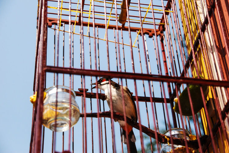 Low angle view of bird perching in cage against sky