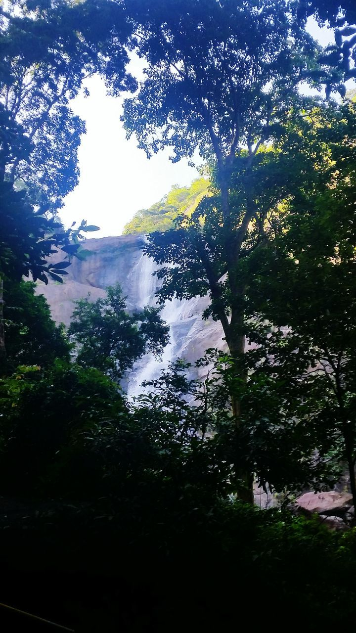 Low Angle View Of Waterfall Seen Through Trees In Forest