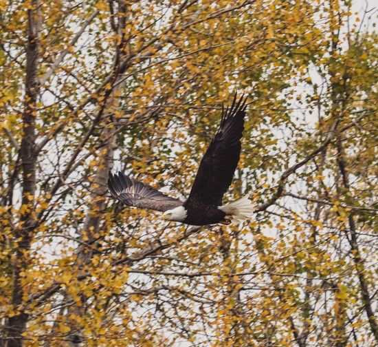 Low angle view of bird flying in a forest