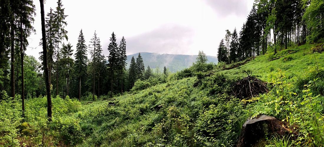 #Mountain #Forest #Best #Time #Beautiful ! 😌 Plant Tree Growth Beauty In Nature