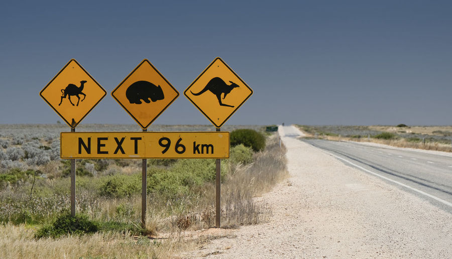 Nullarbor Desert Remote Road Trip Blue South Australia Sign Road Communication Yellow Sky Road Sign Landscape Camel Wombat  Kangaroo Copy Space