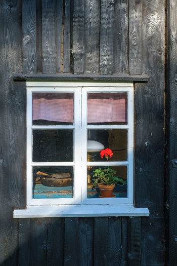 Close-up of potted plant on window
