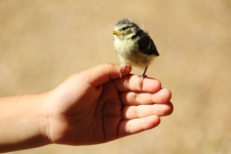 We saved this little creature.... 👍 EyEmNewHere EyeEm Animal Lover EyeEm Selects Human Hand Bird Pets Young Animal Perching Close-up Young Bird Finger