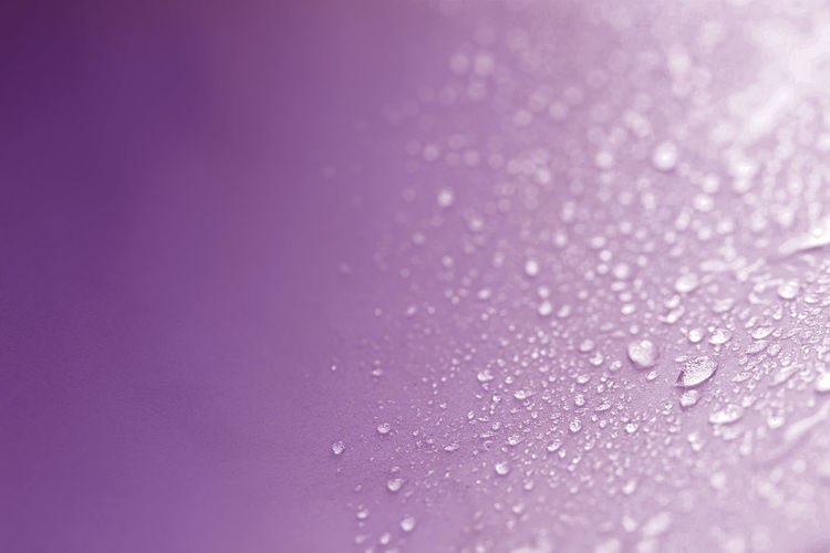 Close-up of water drops on purple background