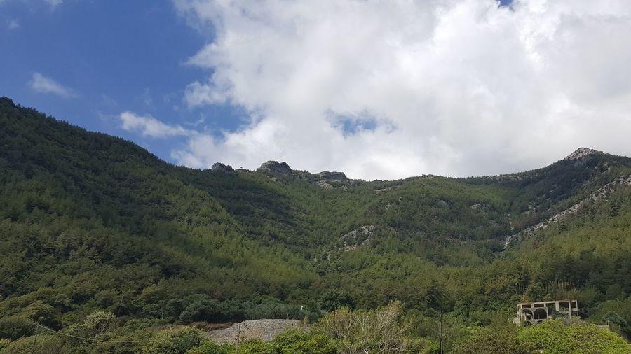 Tea Crop Tree Mountain Tree Area Rural Scene Forest Social Issues Lush - Description Sky Landscape