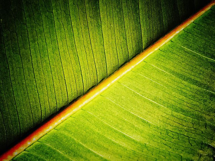 Another Leaf Green Color Full Frame Backgrounds No People Leaf Close-up Indoors  Nature Freshness Plant Pattern Textured