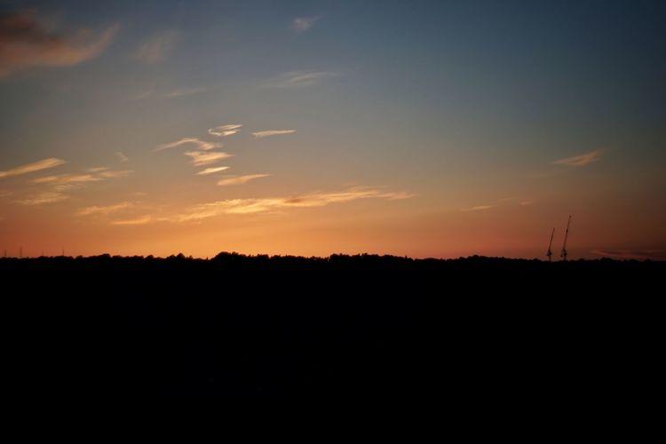 Cranes Tree Sunset Rural Scene Horizon Silhouette Agriculture Beauty Sky Romantic Sky Horizon Over Land Tranquil Scene Countryside