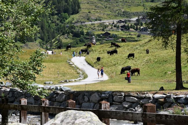 Mountain scenery with grazing cows and people Families Holiday Pasture Tourists Travel Adult Cows Day Field Grass Green Color Group Of People Incidental People Land Landscape Lifestyles Men Mountain Range Mountain Scenery Narrow Path Nature Outdoors People Real People Women