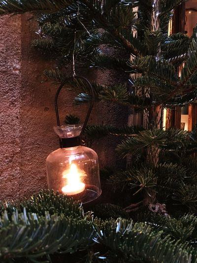 Christmas Lights Christmas Tree Light