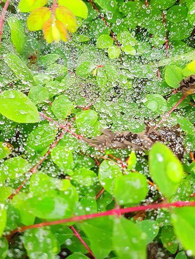 Ashford Kent Closeupshot Nature Photography Leaves Waterdrops