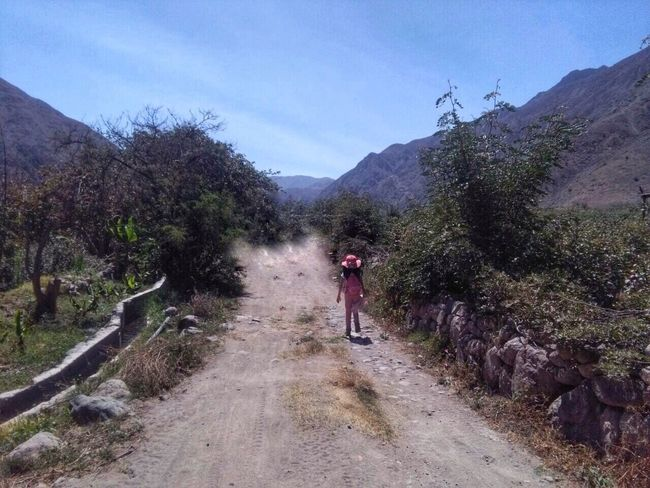 Camino adelante Naturaleza🌾🌿 The Way Forward Nature Beauty In Nature Tranquil Scene