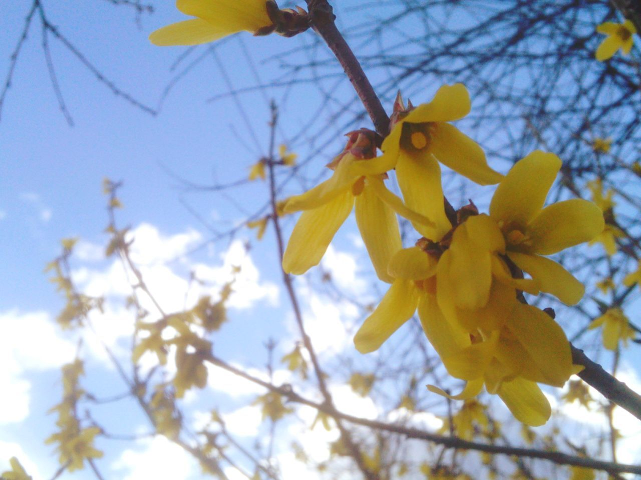 flower, low angle view, branch, beauty in nature, growth, fragility, nature, blossom, tree, springtime, yellow, day, no people, petal, outdoors, clear sky, freshness, sky, close-up, blooming, flower head
