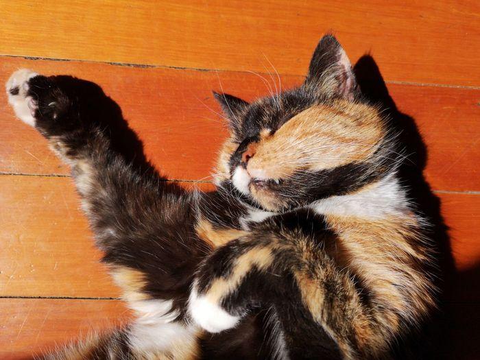 Lula loving the sunshine ... Pets Domestic Cat Animal Themes Close-up Feline Cat