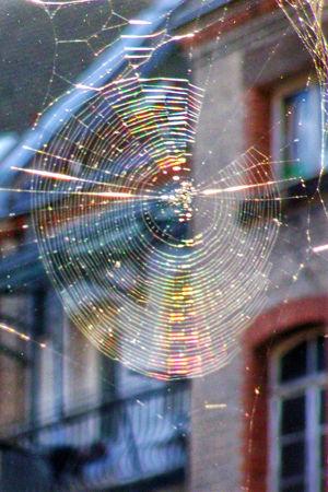 Rainbow Spider Web Samsung NV7