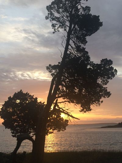 Beautiful sea scape looking out on Buzzards Bay Ma. Sunset Tree Sky Sea Silhouette Water Beauty In Nature