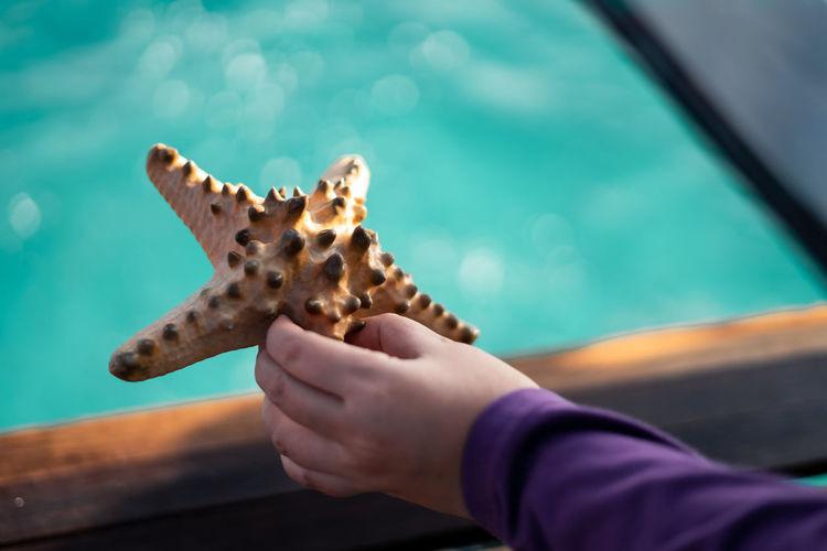 Hand holding a starfish near the sea.