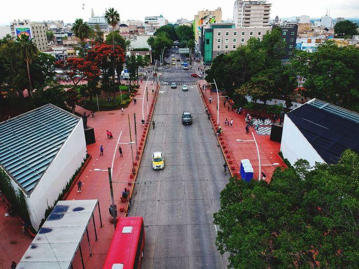 Jalisco Guadalajara City Plant Transportation Street Tree Car Road Mode Of Transportation High Angle View Day