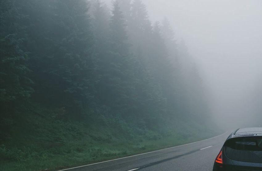 Schwarzwaldhochstrasse Schwarzwald Nebel Tannen Roadtrip Mystical