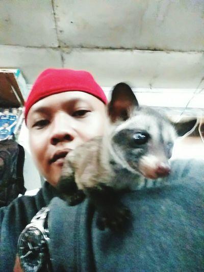 musang pandan noby q Cute Pets