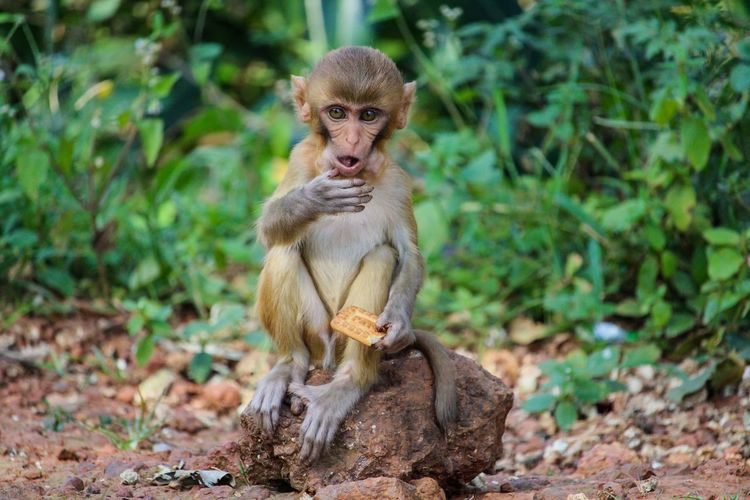 Photography EyeEmNewHere EyeEm Nature Lover Eye4photography  EyeEm Gallery Monkey Monkey Face Monkey Eating Monkey Sitting On The Stone Monkey Sitting Awesome Sitting