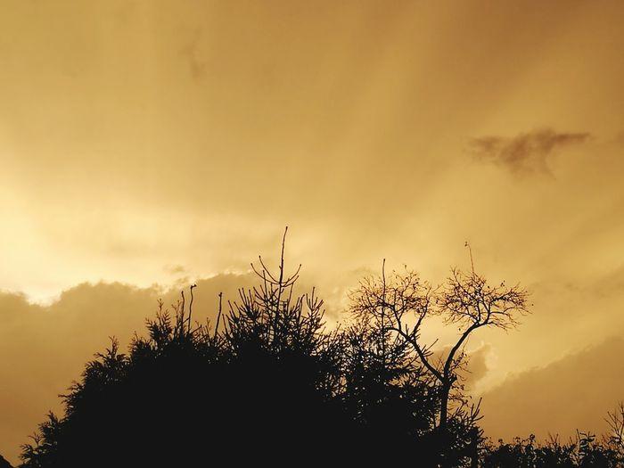 Sunset Tree Bird Flying Silhouette Mountain Sky Animal Themes Cloud - Sky Dramatic Sky Atmospheric Mood Forked Lightning Lightning Atmosphere