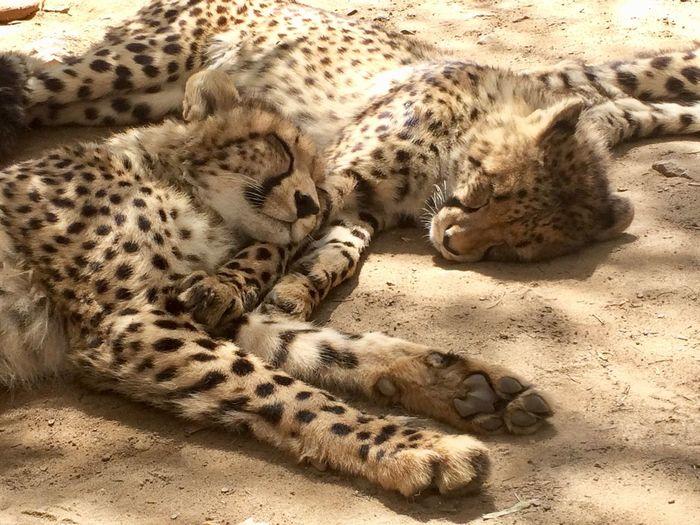 Cuddling Cango