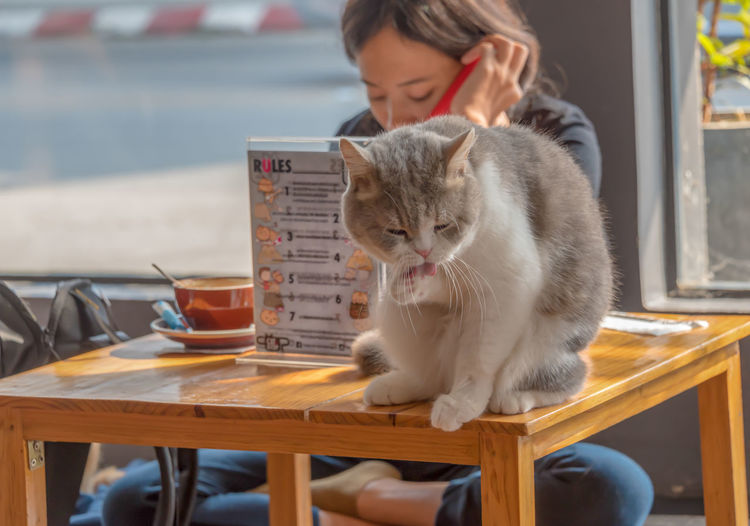 Cat resting on a table at a coffee shop in Chaing Rai, Thailand while a patron reads a book Adorable, Animal, Animals, Background, Beautiful, Cafe, Cat, Cats, Chaing Rai, Chair, Closeup, Coffee, Coffee Shop, Color, Cute, Domestic, Eyes, Face, Feline, Fluffy, Food, Friendly, Fur, Furry, Hair, Happy, Kitten, Kitty, Mammal, Pet, Portrait, Relax, Re Animal Themes Close-up Communication Day Domestic Animals Domestic Cat Focus On Foreground Indoors  Mammal One Animal One Person Pets Real People Sitting Table Technology Wireless Technology