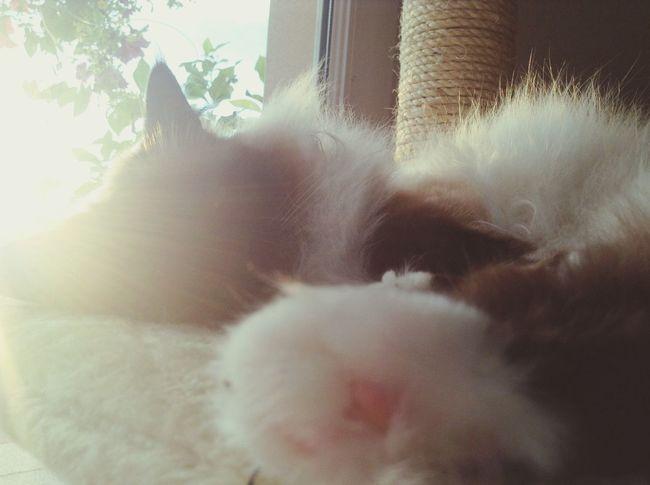 Sleeping cat ❤️ Cat Relaxing Love Cute