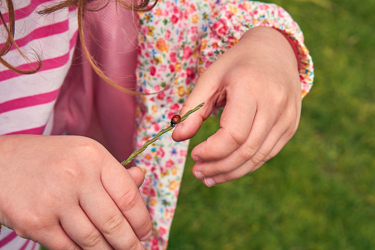 Closeup of hand holding plant with ladybug