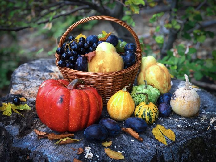 Autumn still life consisting of wooden basket filled with fruits and vegetables placed on a tree log