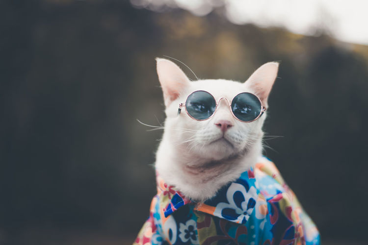 Portrait of Hipster White Cat wearing sunglasses and shirt Cat Close-up Domestic Domestic Animals Domestic Cat Fasion Feline Focus On Foreground Front View Indoors  Looking At Camera Mammal One Animal Pets Portrait Vertebrate Vintage Whisker