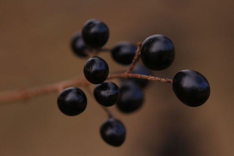Close-up of berries on a tree