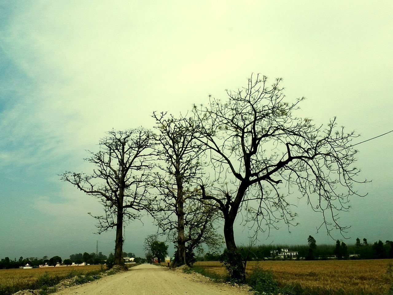 tree, landscape, bare tree, nature, tranquility, tranquil scene, scenics, sky, field, beauty in nature, outdoors, lone, day, no people, clear sky