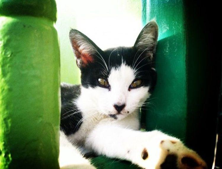 Meow🐱 Kitty Cat♡ Morning Light Malaka Lazy Day Traveling