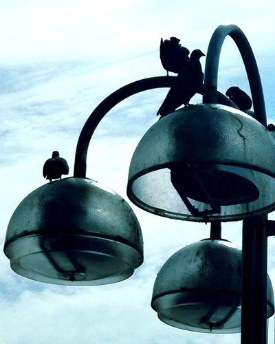 ' BirdKINGstokes'' 2018 Birds Tranquility Watching Cute Mood Cityscape City Streetlights Sunset Sundown Afternoon Urban Urbex Beautiful Day City Life Sunny Sunshine Summertime Summer Oslo Outdoors Birds LoveAdove Dove Pigeon Silhouette Close-up Sky