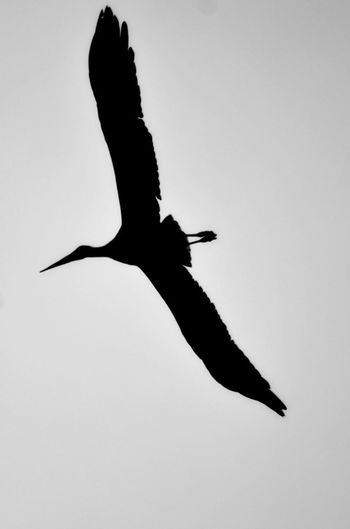 Animal Animale Bird Cicogna Cielo Shadow Silhouette Sky Uccello