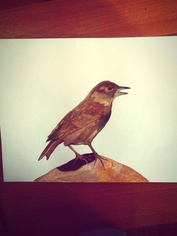Drawing I'am Painting Moscow City Bird Colours