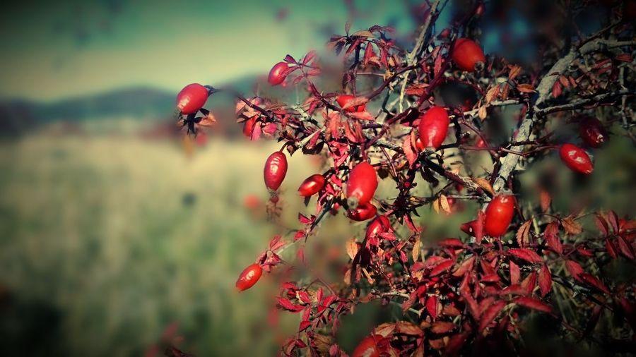 Red Nature Outdoors Rosa Silvestre ... Jacetania