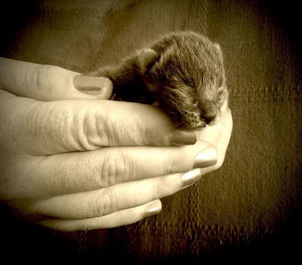 Cat Blackandwhite EyeEmbestshots EyeEmBestPics EyeEm Nature Lover EyeEm Best Shots Cute Pets Kitten Cute EyeEm Best Shots - Black + White Pet Portraits