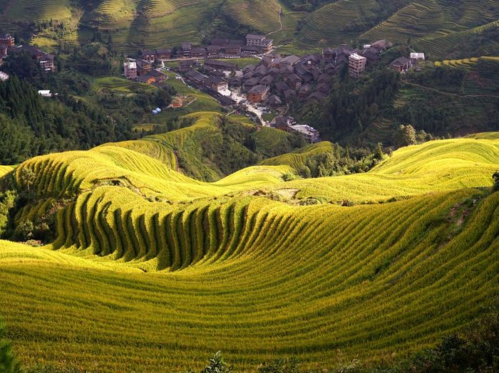 China Guilin Nature Terraced Field Tree Agriculture Field Sky Landscape Green Color Rice Paddy Asian Style Conical Hat Rice - Cereal Plant Plantation Agricultural Field Cultivated Land Mountain